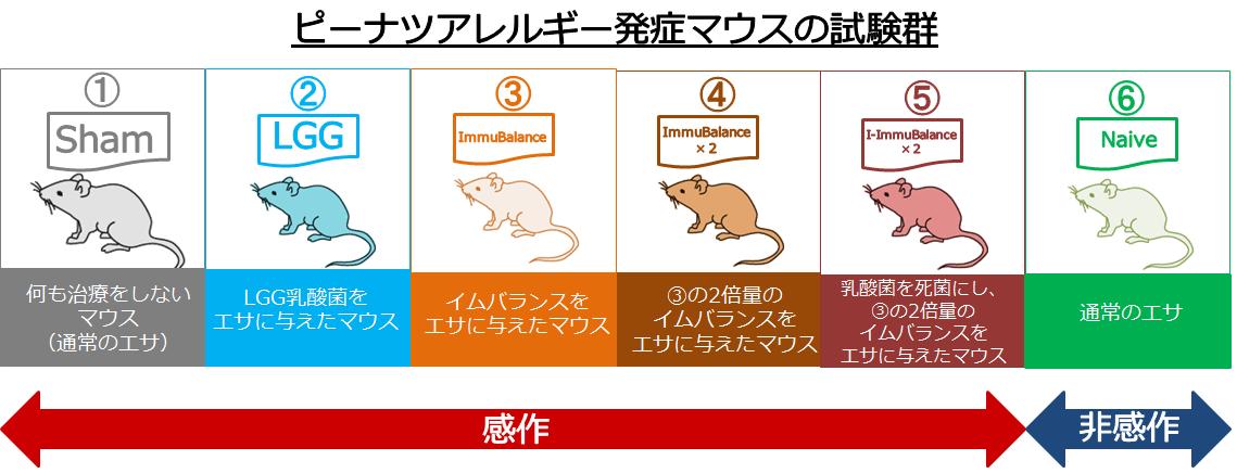 ピーナツアレルギー発症マウスの試験群